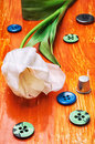 Tulip and buttons with thread white on orange wooden background Stock Images