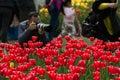 Tulip In China