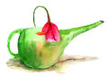 Tulip flower in a green watering can Stock Photos