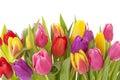 Tulipán kvety