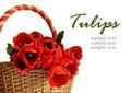 Tulip Flowers In A Basket