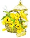 Tulip Flowers, canary bird and decorative birdcage. watercolor