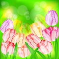 Tulip flowers on green holiday background illustration Royalty Free Stock Photos