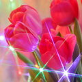Tulip flowers greeting card blur stock photos holiday mothers day valentines or easter background pink tuilps on background with Stock Photography