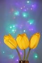 Tulip flowers greeting card blur stock photos holiday mothers day valentines or easter background yellow tuilps on blue background Stock Photos