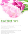 Tulip flowers postcard concept
