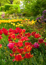 Tulip garden a of dazzling tulips in a beautiful setting Royalty Free Stock Images