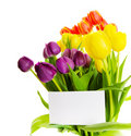 Tulip gift Royalty Free Stock Images