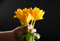 Tulip in hand Royalty Free Stock Photo