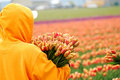 Tulip picker Stock Image