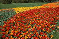Tulip road Royalty Free Stock Images