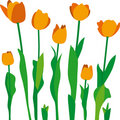Tulipanes Stock Photo
