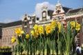 Tulips in Amsterrdam Royalty Free Stock Photo