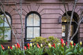 Tulips apartment building manhattah new york city spring by an in greenwich village manhattan Royalty Free Stock Image
