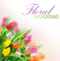 Tulips background Royalty Free Stock Photo