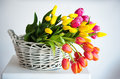Tulips in the basket on white background Royalty Free Stock Images