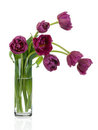 Tulips bouquet in glass vase Royalty Free Stock Photo