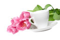 Tulips Bouquet Isolated