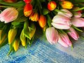 Tulips Bouquet of pink living coral and blue festove holiday background Royalty Free Stock Photo