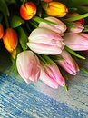 Tulips Bouquet of pink yellow lilac living coral and blue festive holiday background Concept for Valentine`s Day, Women  day ,Wedd Royalty Free Stock Photo
