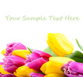 Tulips bouquet of on a white background Stock Images
