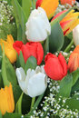 Tulips bouquet yellow white and red in a spring Stock Photos