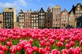 Tulips with canal houses of Amsterdam Royalty Free Stock Photo