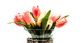 Tulips in a crystal vase grouping of tulip flowers with white background Royalty Free Stock Photo