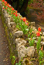 Tulips decorating a wall orange in springtime planted on top of stone to decorate it Stock Photo