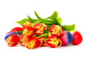 Tulips and Easter eggs. Stock Images