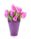Tulips and eggs isolated Royalty Free Stock Photo