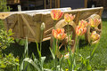 Tulips and flower bed on the lawn Royalty Free Stock Photo