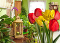 Tulips in flower shop Royalty Free Stock Image