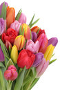 Tulips flowers bouquet in spring or mother's day isolated Royalty Free Stock Photo
