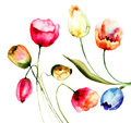 Tulips flowers watercolor illustration of beautiful Stock Images