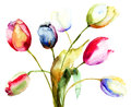 Tulips flowers watercolor painting of Royalty Free Stock Image