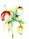 Tulips flowers watercolor painting of Royalty Free Stock Images