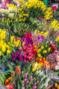 Tulips fresh flowers bunches of tulips for sale st flower market Stock Photography