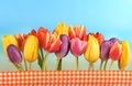 Tulips in front of blue sky line colorful tulipseaster holidays Royalty Free Stock Photography