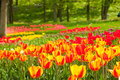 Tulips in a garden of istanbul bed Stock Photography
