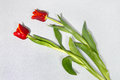 Tulips on granite Royalty Free Stock Photography