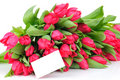 Tulips and greeting card isolated on white Royalty Free Stock Image