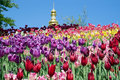 Tulips on a hill and the dome of the church behind them. Royalty Free Stock Photo