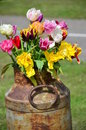 Tulips inserted into a rusty drum bottle jug Royalty Free Stock Image