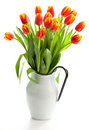 Tulips in the jug Stock Photos