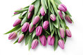 Tulips lovely on white flowers and plats Royalty Free Stock Photos