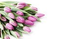 Tulips lovely on white flowers and plats Stock Photo
