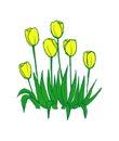 Tulips pattern on white seamless background. Royalty Free Stock Photo