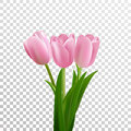 Tulips. Pink vector tulips bouquet isolated. Flowers in different shapes