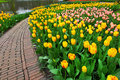 Tulips in spring garden yellow and red along footpath Stock Photo